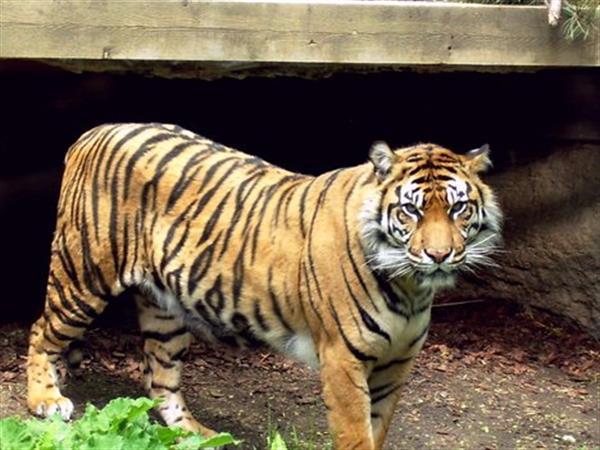Medan Zoo Swiss-Belinn Medan