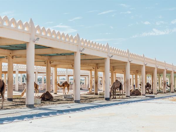 Royal Camel Farm Grand Swiss-Belhotel Waterfront, Seef