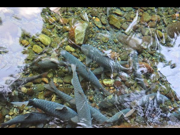 Cibulan Waterpark Swiss-Belhotel Cirebon