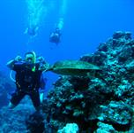 Raro - Diving