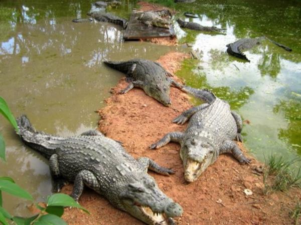 Teritip Crocodile Farm Swiss-Belhotel Balikpapan
