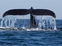 Whale Watch 2 Bedroom