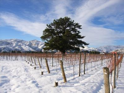 Wooing Tree Vineyard