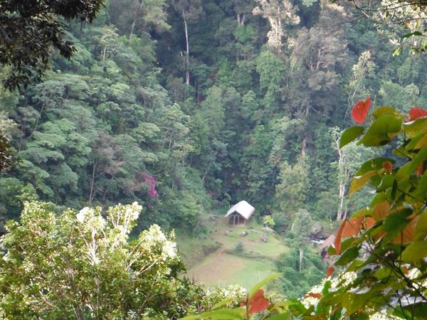 Kokoda Tears Tracking & Tours