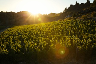 Black Ridge Vineyard & Winery