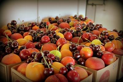 Webbs Fruit