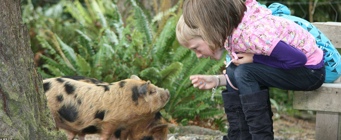 Staglands Pigs