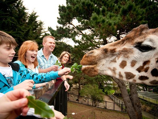 Wellington Zoo Distinction Wellington Century City Hotel
