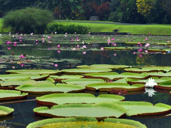 Bogor Botanical Gardens Zest Hotel Bogor