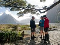Stay & Cruise Milford Sound