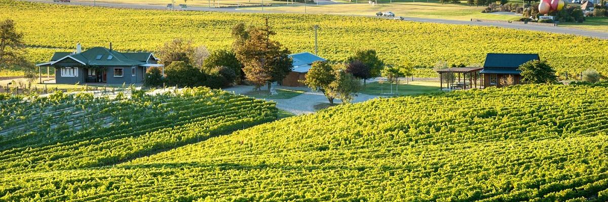 Scott Base Vineyard
