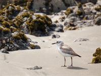 New Chums Beach Explorer Coromandel Adventures