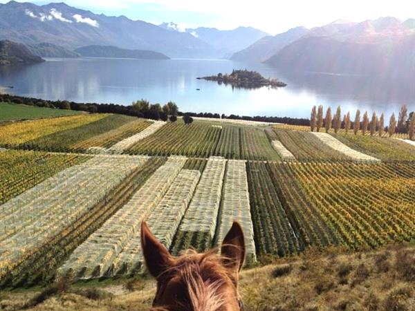 Waterfall Equestrian Centre