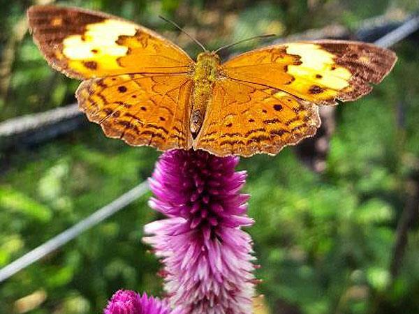 Gita Persada Butterfly Park Swiss-Belhotel Lampung