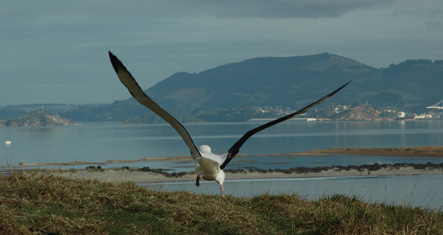 Tour 5 - Otago Peninsula plus Royal Albatross Tour