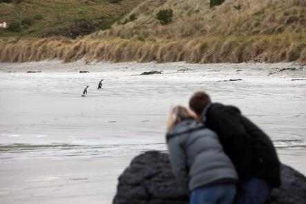Tour 7 - Otago Peninsula Wildlife Double No 8 Tours for NZ Shore Excursions