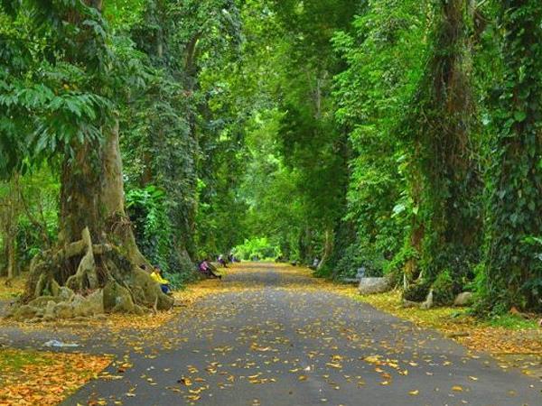 Bogor Botanical Gardens Zest Bogor